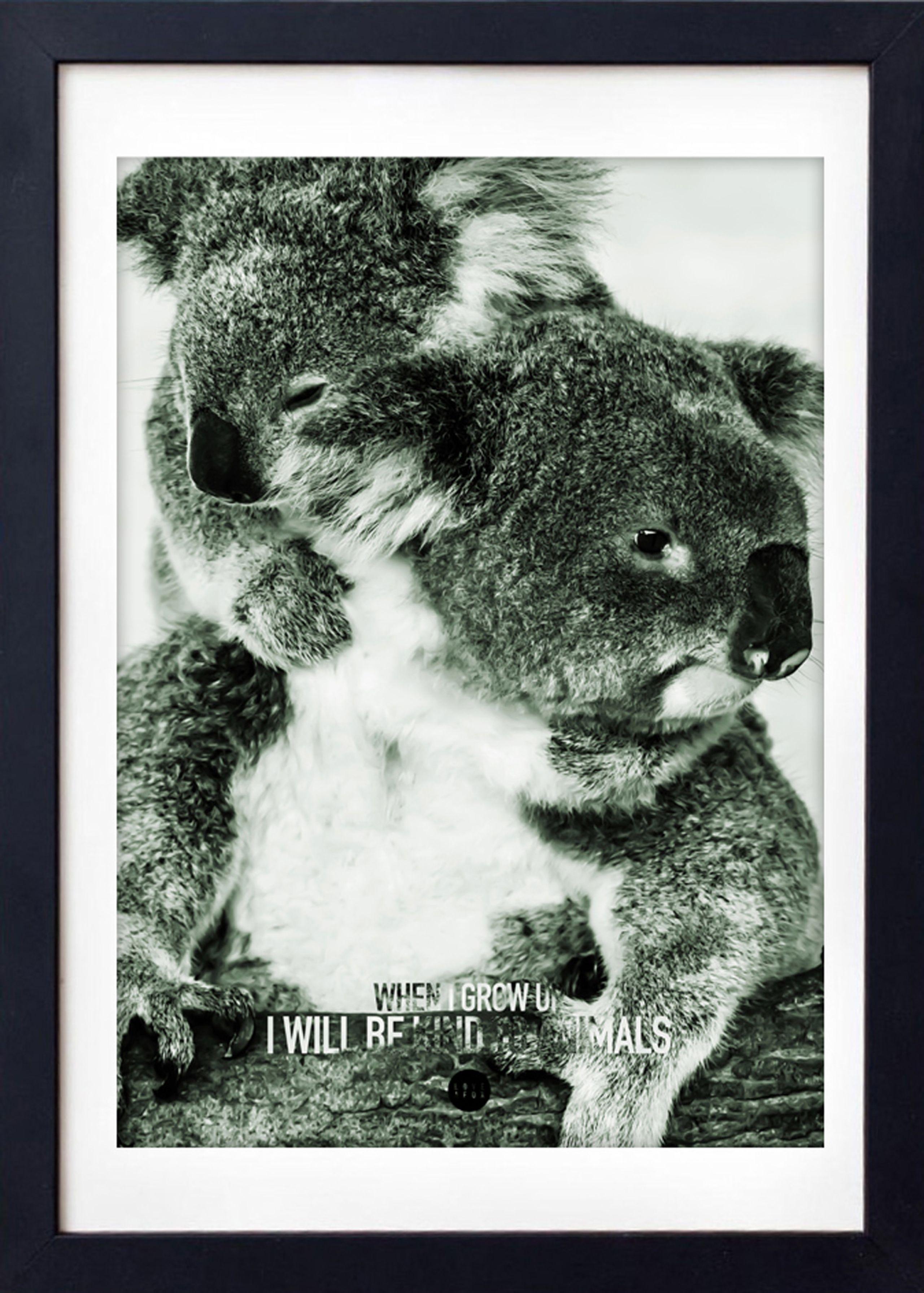 Image of   Baby Koala Colour