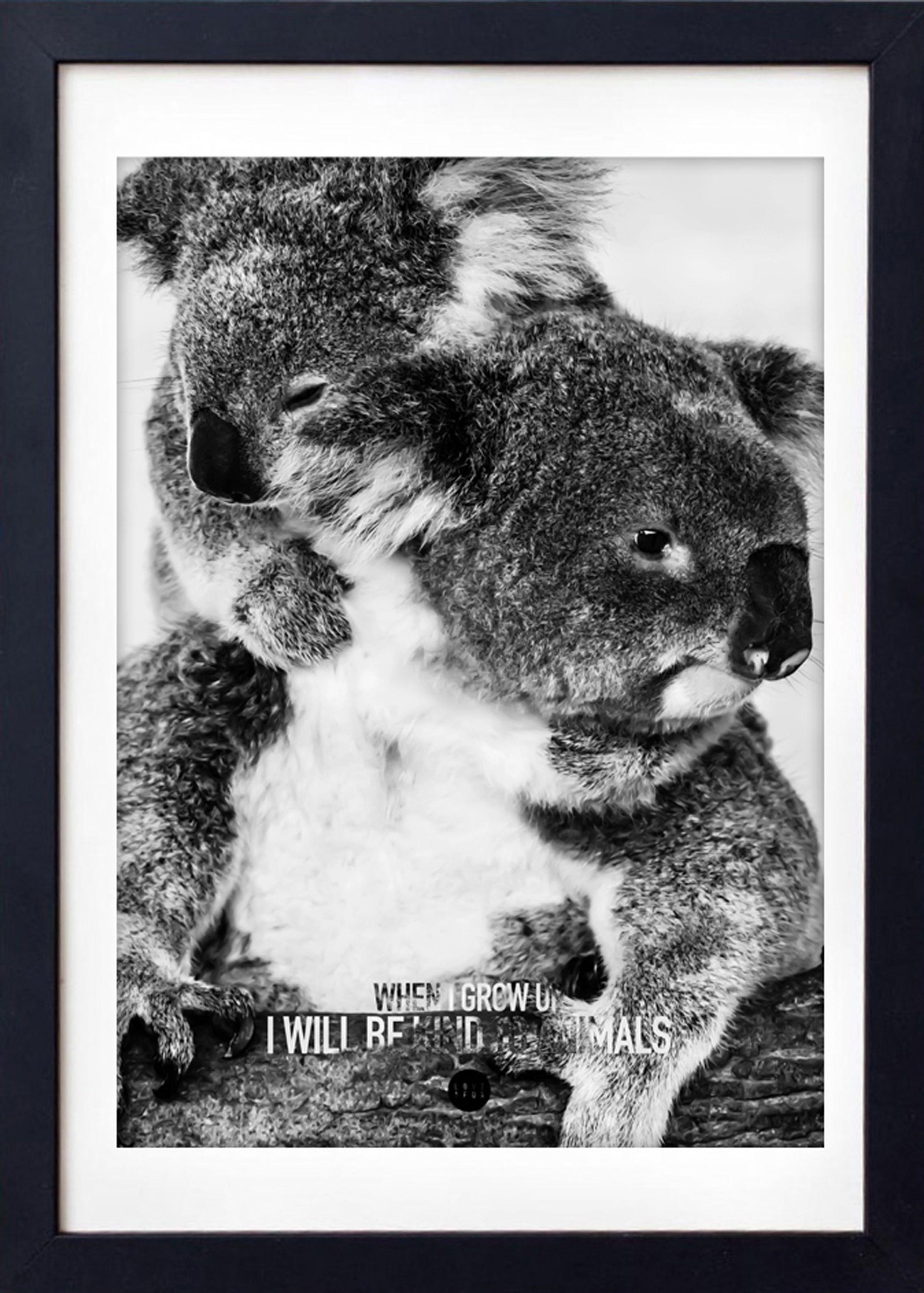 Image of   Baby Koala Grey