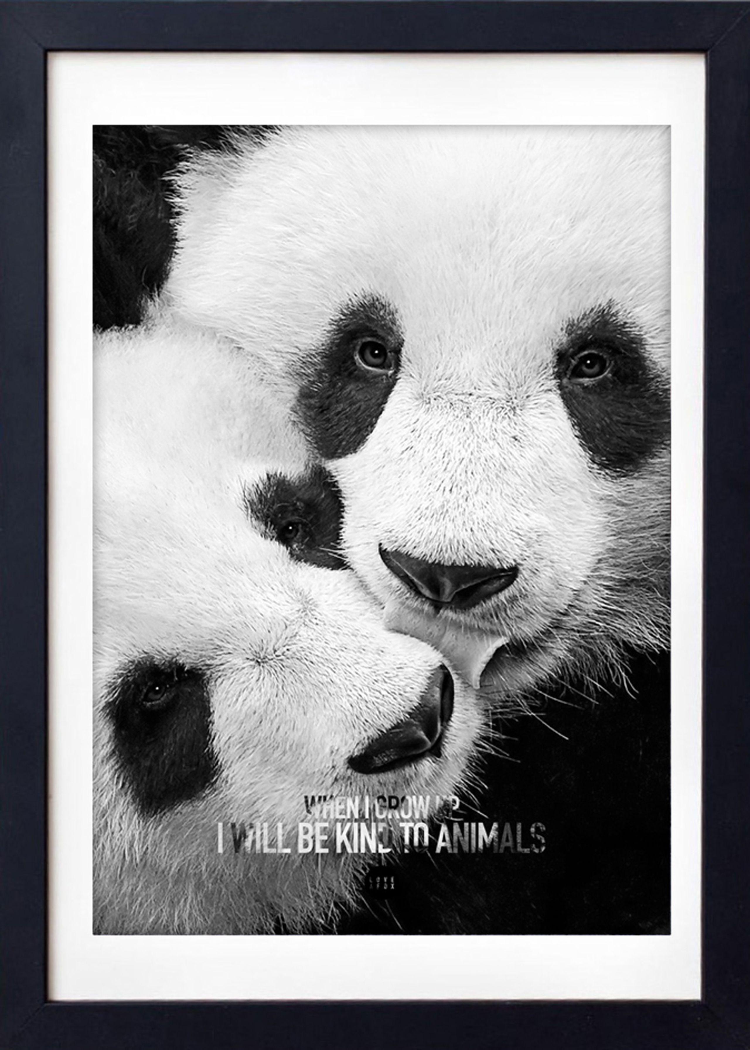 Image of   Baby Panda Grey