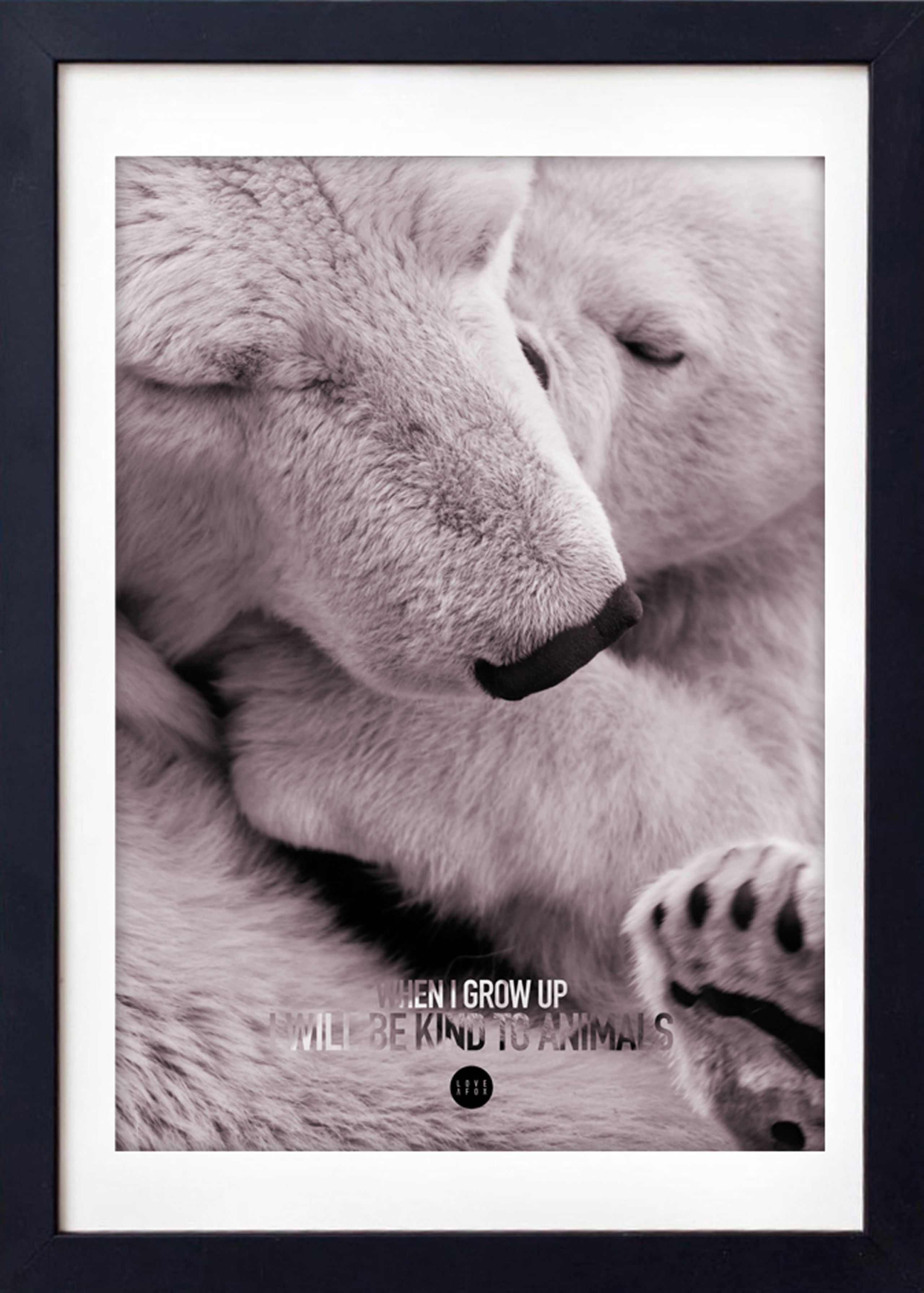 Image of   Baby Polar Bear Colour