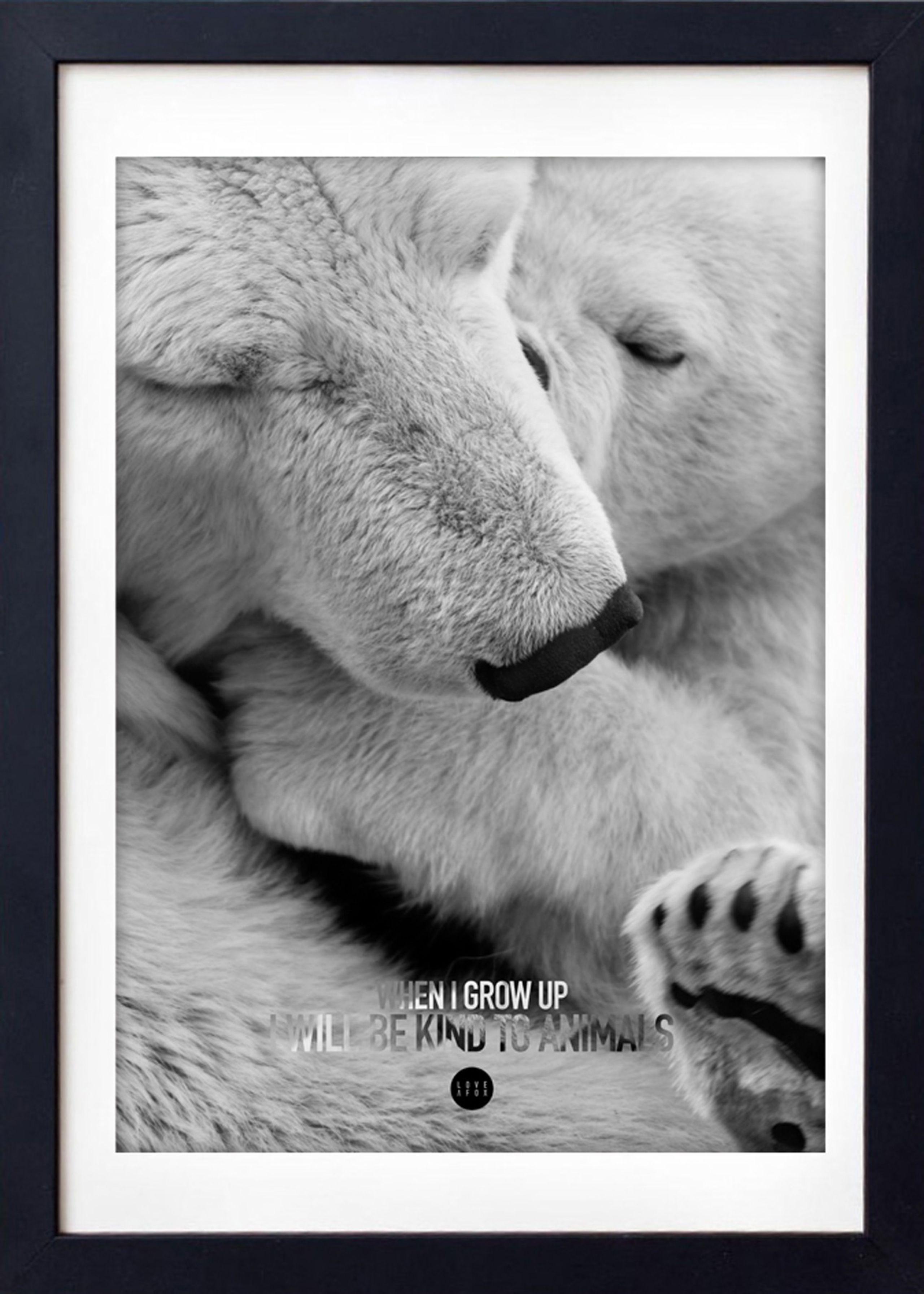 Image of   Baby Polar Bear Grey