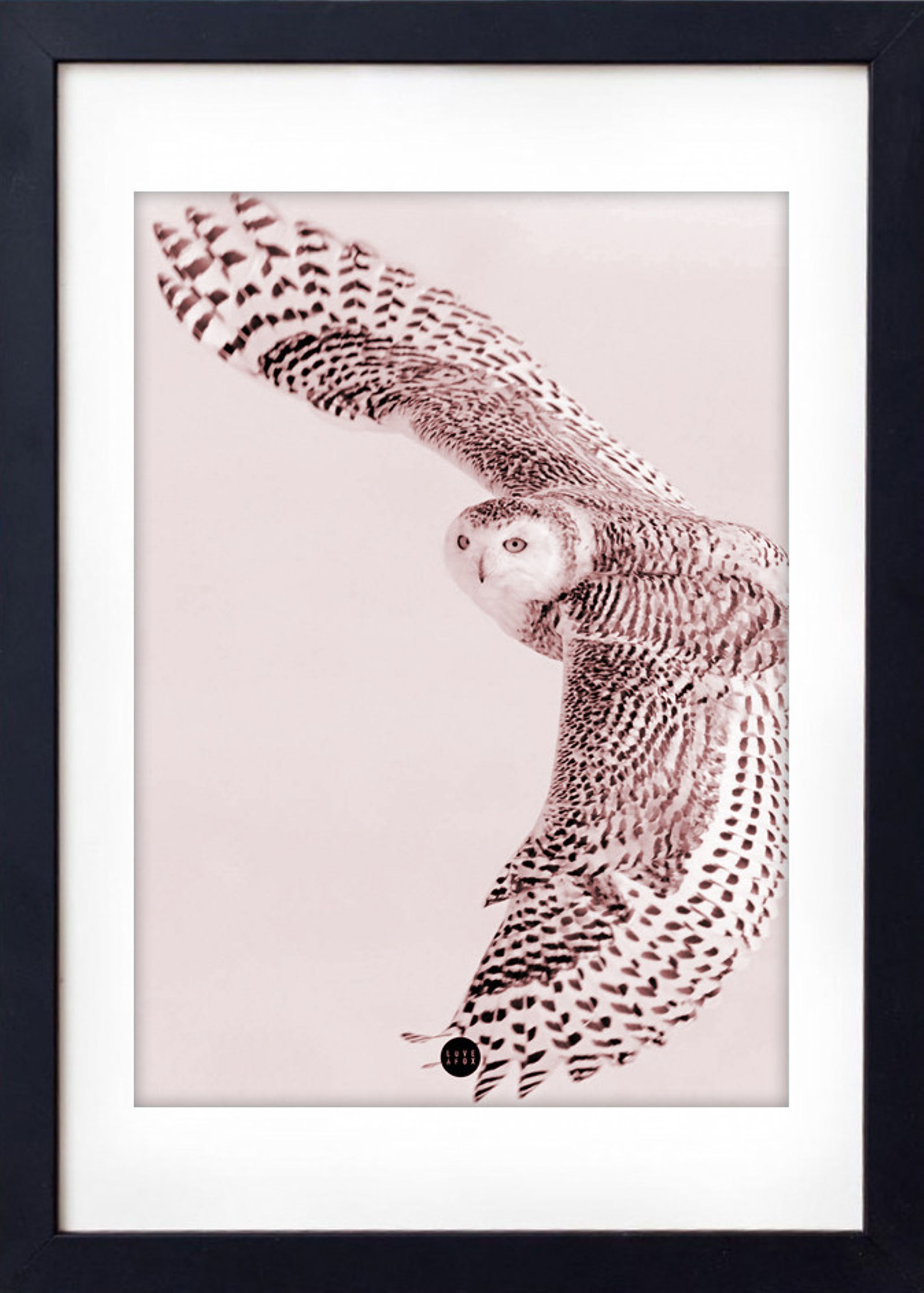 Image of   Powder Owl Limited Edition
