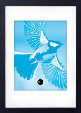 - Poster - Blue Sparrow - Blå