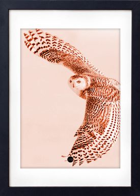 - Poster - Copper Owl Limited Edition - Kobber