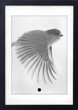 - Poster - Grey Birdie Limited Edition - Grå