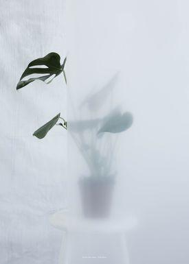 Kristina Dam - Poster - Split-Leaf II - Split-Leaf II