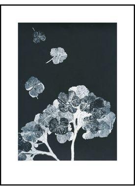 Pernille Folcarelli - Poster - Paper Prints Nature - hortensia black ink print