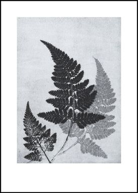 Pernille Folcarelli - Poster - Paper Prints Nature - fern bluegrey print