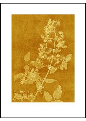 Pernille Folcarelli - Poster - Paper Prints Nature - clematis curry print