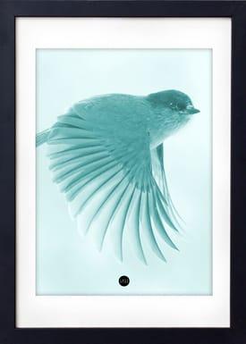 - Poster - Petroleum Birdie Limited Edition - Petroleum