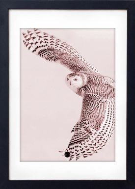 - Poster - Powder Owl Limited Edition - Pudder