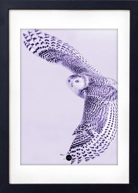 - Poster - Purple Owl Limted Edition - Lilla