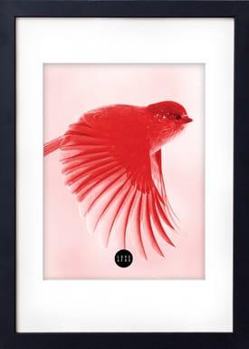 - Poster - Red Birdie - Rød