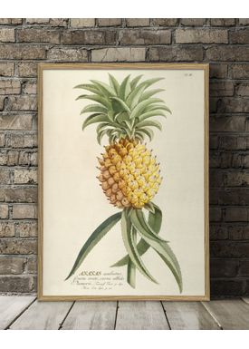 The Dybdahl Co - Poster - Ananas. Plant Poster #3700 - Ananas