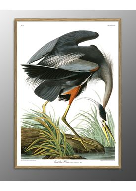 The Dybdahl Co - Poster - Great Blue Heron. Print #6501 - Blue Heron
