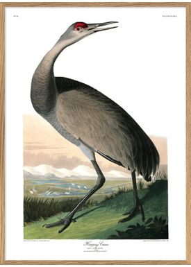 The Dybdahl Co - Poster - Hopping Crane #6519 - Crane