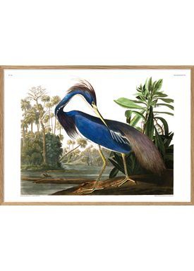 The Dybdahl Co - Poster - Louisiana Heron. Print #6502 - Heron