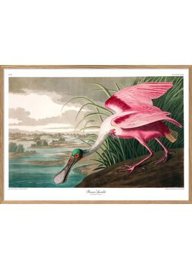 The Dybdahl Co - Poster - Roseate Spoonbill. Print #6506 - Spoonbill