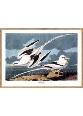 The Dybdahl Co - Poster - Tropic Bird #6529 - Bird