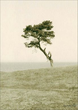 ViSSEVASSE - Poster - Dan Isaac Wallin - Haväng - Haväng