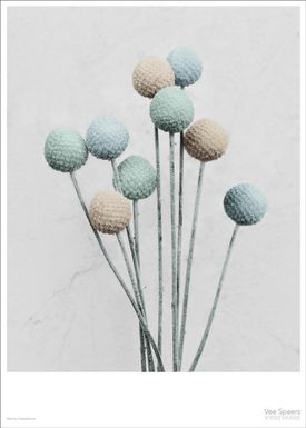 ViSSEVASSE - Poster - Vee Speers - Botanic Series - Craspedia - Blue