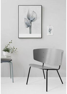 ViSSEVASSE - Poster - Vee Speers - Botanic Series - Anthurium Andreanum