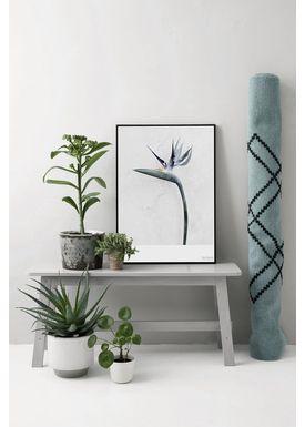 ViSSEVASSE - Poster - Vee Speers - Botanic Series - Strelitzia Reginae