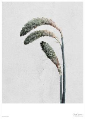 ViSSEVASSE - Poster - Vee Speers - Botanic Series - Pennisetum