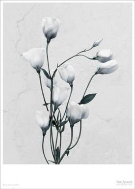 ViSSEVASSE - Poster - Vee Speers - Botanic Series - Eustoma Grandiflorum